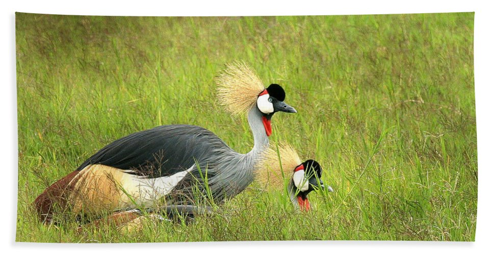 Crane Hand Towel featuring the photograph African Gray Crown Crane by Joseph G Holland