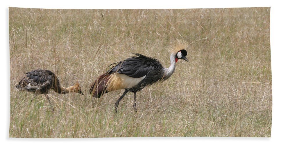 African Gray Crown Crane Hand Towel featuring the photograph African Grey Crown Crane by Joseph G Holland