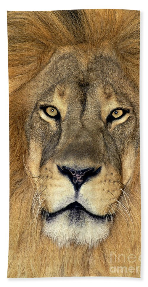 African Lion Bath Towel featuring the photograph African Lion Portrait Wildlife Rescue by Dave Welling