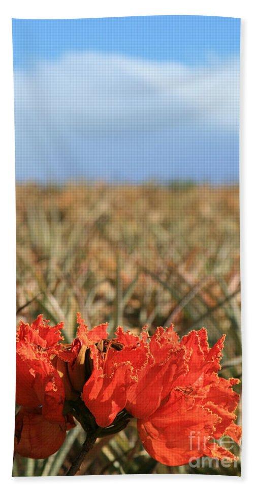 Aloha Bath Sheet featuring the photograph African Tulip Blossom Over Pineapple Field Aloha Makawao by Sharon Mau