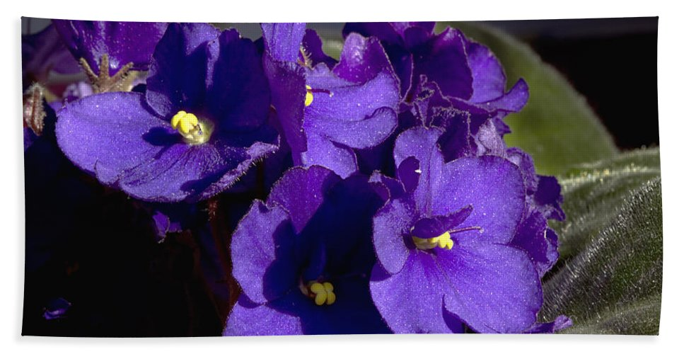 Flowers Hand Towel featuring the photograph African Violets by Phyllis Denton