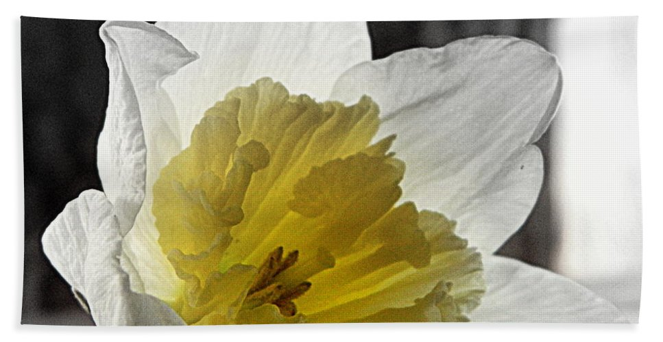 Daffodil Bath Sheet featuring the photograph Afterglow by Kathy Barney