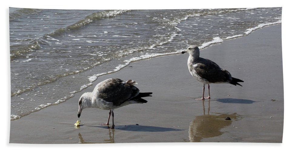 Beach Bath Towel featuring the photograph Afternoon Snack by Kelly Holm
