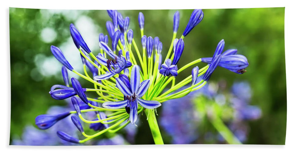 Agapanthus Bath Sheet featuring the photograph Agapanthus Bokeh by Kay Brewer