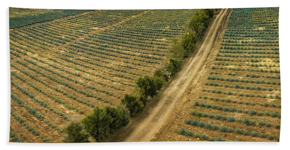 Agave Fields Bath Sheet featuring the photograph Agave Fields by Chris Lemanz