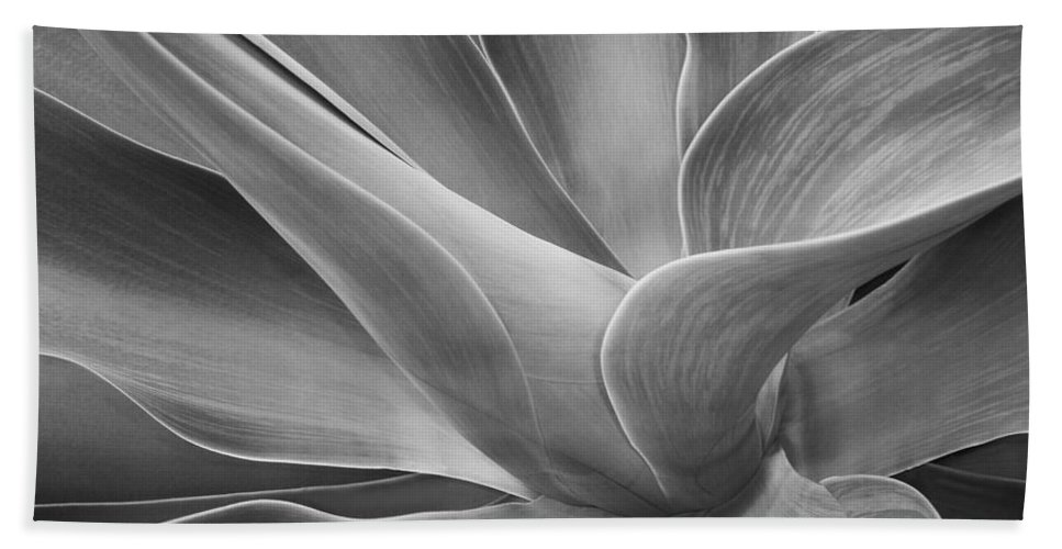 Agave Bath Sheet featuring the photograph Agave Shadows And Light by Bel Menpes
