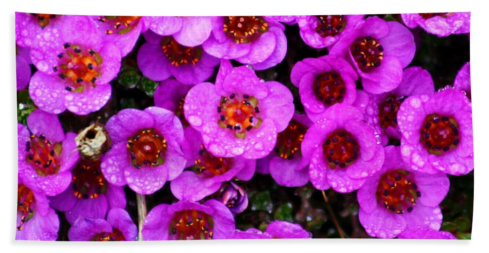 Flowers. Wild Flowers Hand Towel featuring the photograph Alaskan Wild Flowers by Anthony Jones