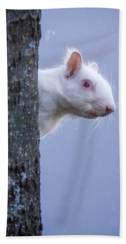 Animals Hand Towel featuring the photograph Albino Squirrel by Rikk Flohr