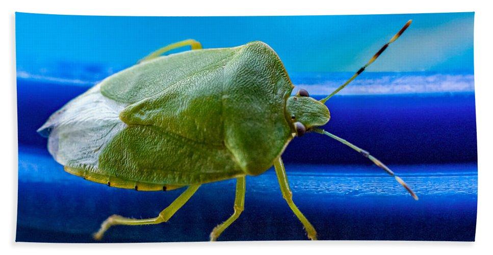 Steve Harrington Hand Towel featuring the photograph Alice The Stink Bug 3 by Steve Harrington