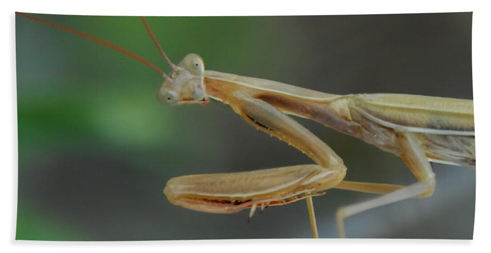 Praying Mantis Hand Towel featuring the photograph Aliens Among Us by Donna Blackhall