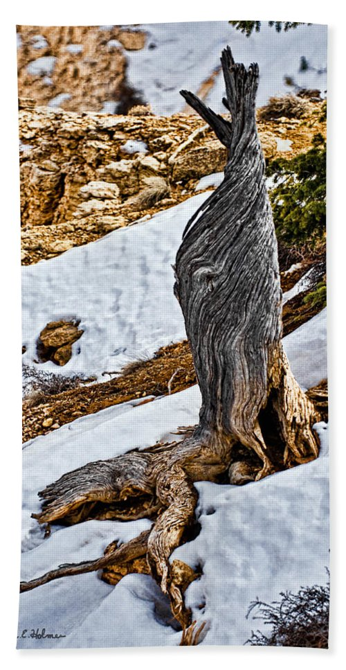 Tree Bath Towel featuring the photograph All That Remains by Christopher Holmes