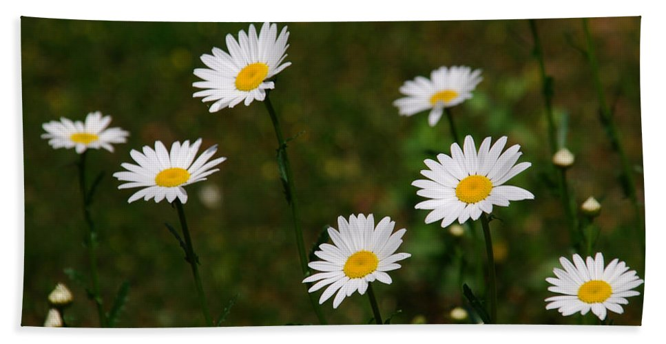 Daisy Bath Sheet featuring the photograph All The Daisies by Susanne Van Hulst