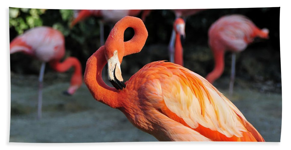 Flamingo Hand Towel featuring the photograph All Twisted Up by David Lee Thompson