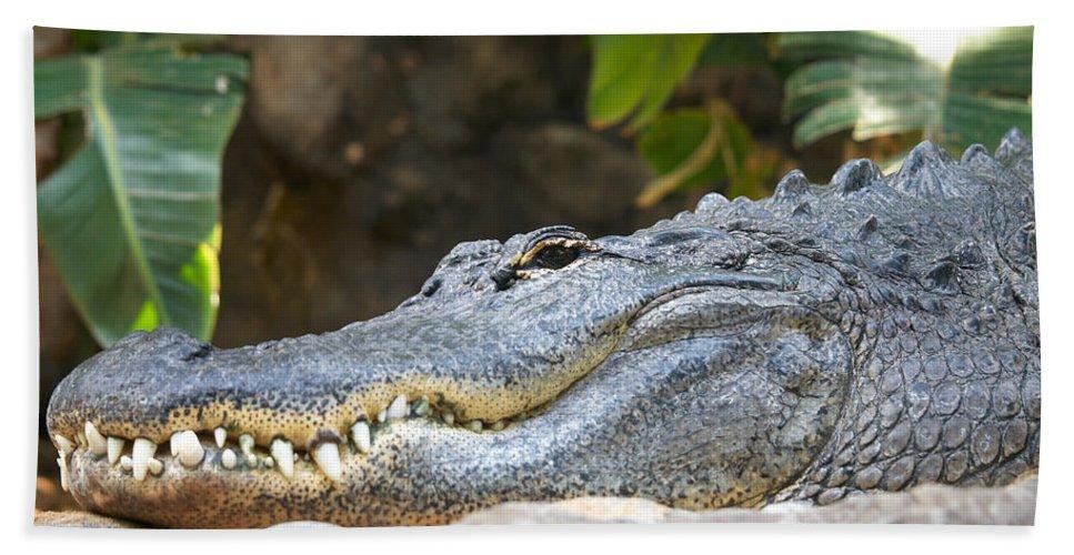 Loro Park Hand Towel featuring the photograph Alligator 1 by Jouko Lehto
