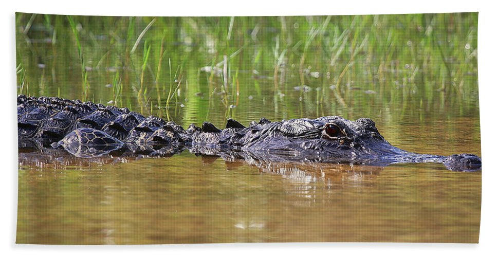 Alligator Hand Towel featuring the photograph Alligator by Dennis Goodman