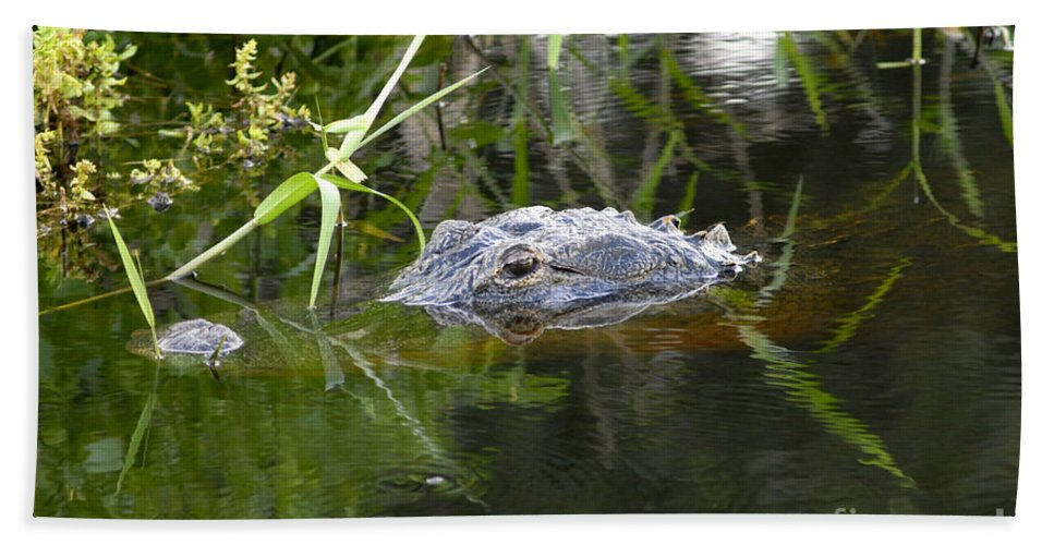 Alligator Bath Towel featuring the photograph Alligator Hunting by David Lee Thompson