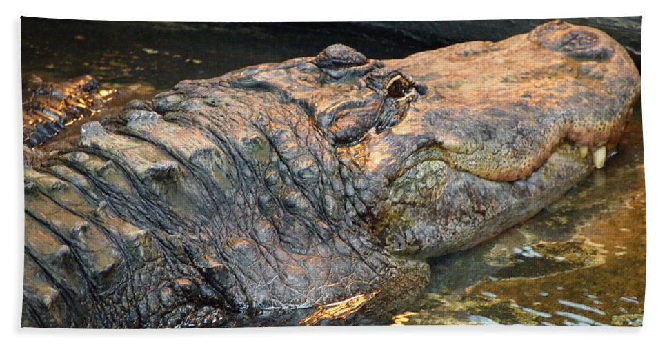 Reptile Land Bath Sheet featuring the photograph Crocodile Time by Jennifer Craft