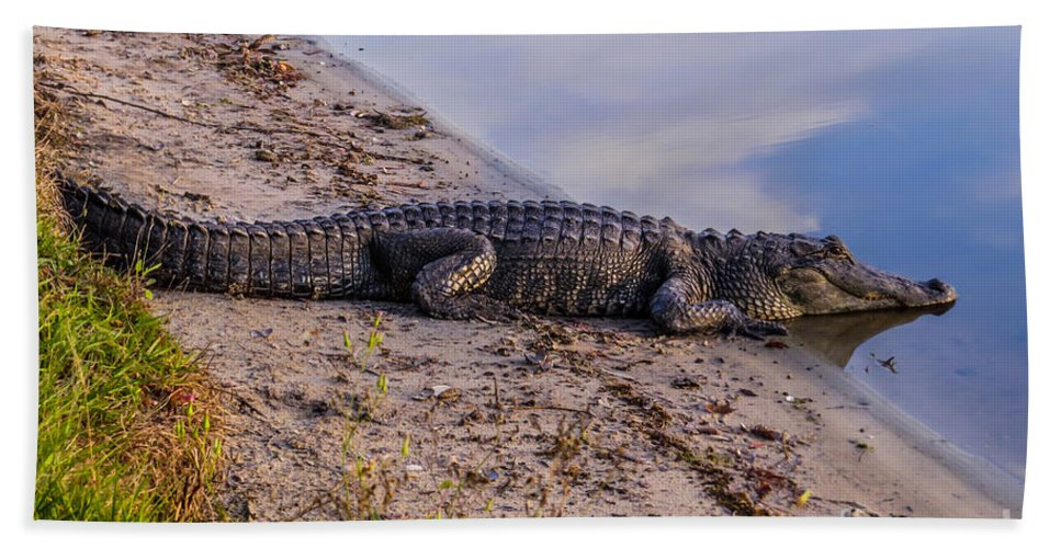 Gators Hand Towel featuring the photograph Alligator Warming In The Sun by Zina Stromberg