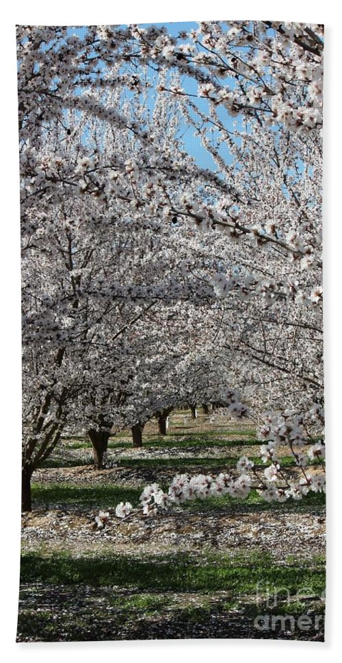 Almond Hand Towel featuring the photograph Almond Orchard by Marta Robin Gaughen