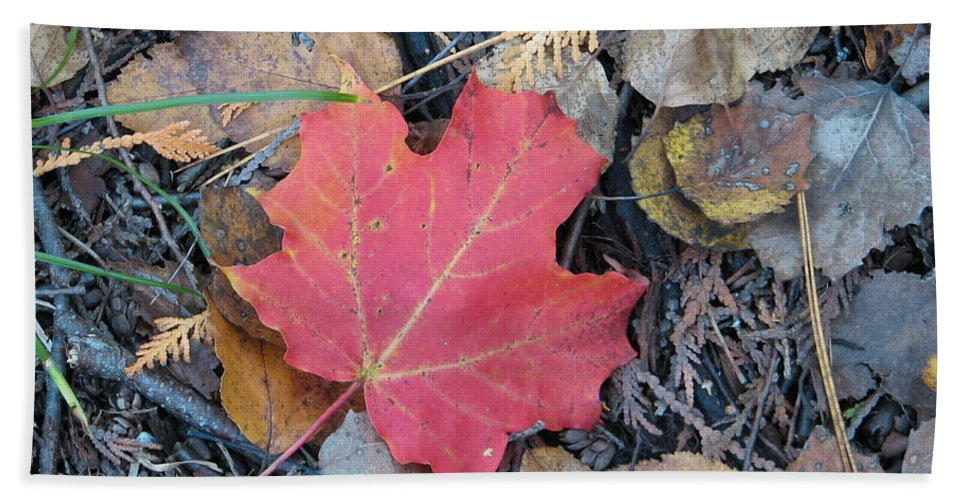 Leaves Hand Towel featuring the photograph Alone In The Woods by Kelly Mezzapelle
