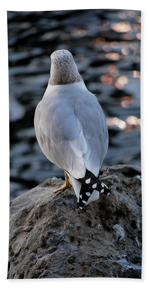 Seagull Hand Towel featuring the photograph Alone by Robert Meanor