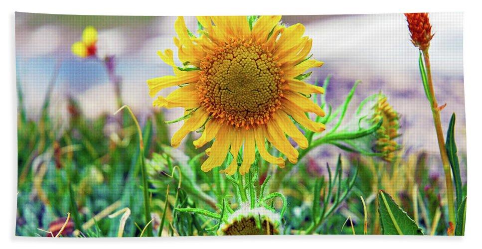 Sunflower Hand Towel featuring the photograph Alpine Sunflower In Summer by Robert Meyers-Lussier