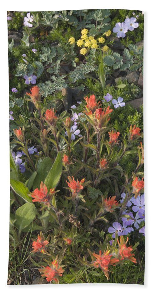 Alpine Bath Sheet featuring the photograph Alpine Wildflowers Hurricane Ridge 4031 by Bob Neiman
