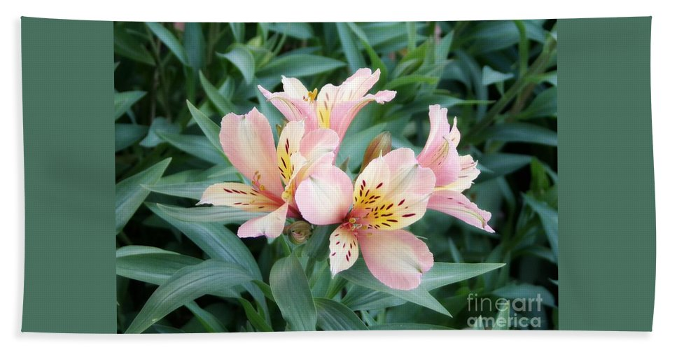 Alstroemeria Bath Sheet featuring the photograph Astroemeria by Elizabeth Duggan