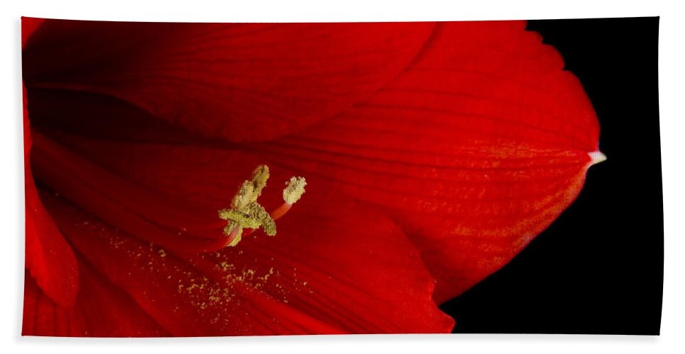 Amaryllis Hand Towel featuring the photograph Amaryllis Flower Close Up 12-27-10 by James BO Insogna
