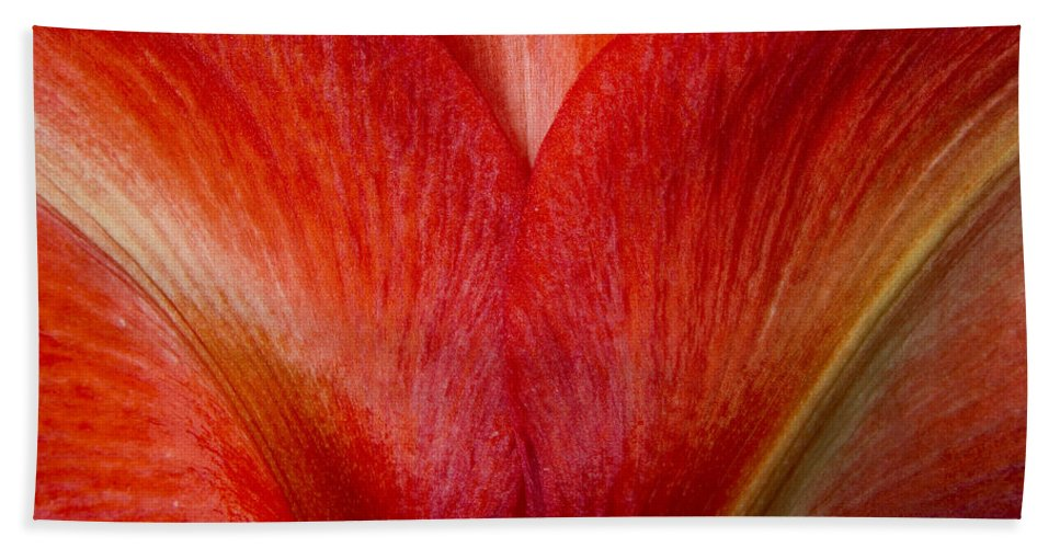 Amaryllis Hand Towel featuring the photograph Amaryllis Flower Petals by James BO Insogna