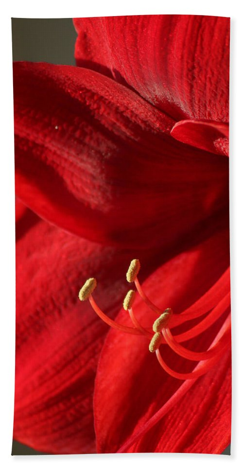 Flower Bath Sheet featuring the photograph Amaryllis6689 by Gary Gingrich Galleries