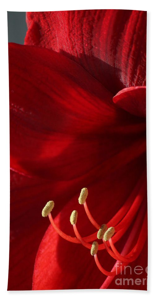 Flower Bath Sheet featuring the photograph Amaryllis6790 by Gary Gingrich Galleries