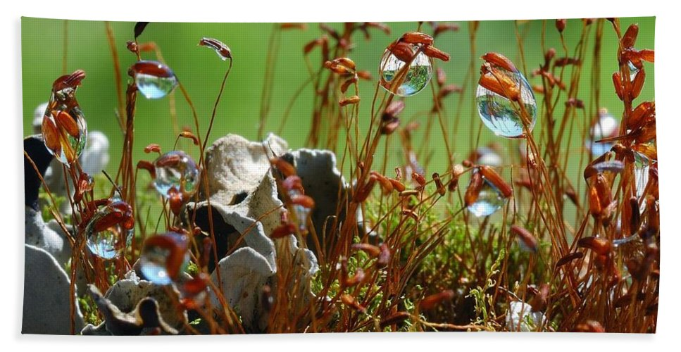 Microcosm Hand Towel featuring the photograph Amazing Jungle Of The Microcosm by Yuri Hope