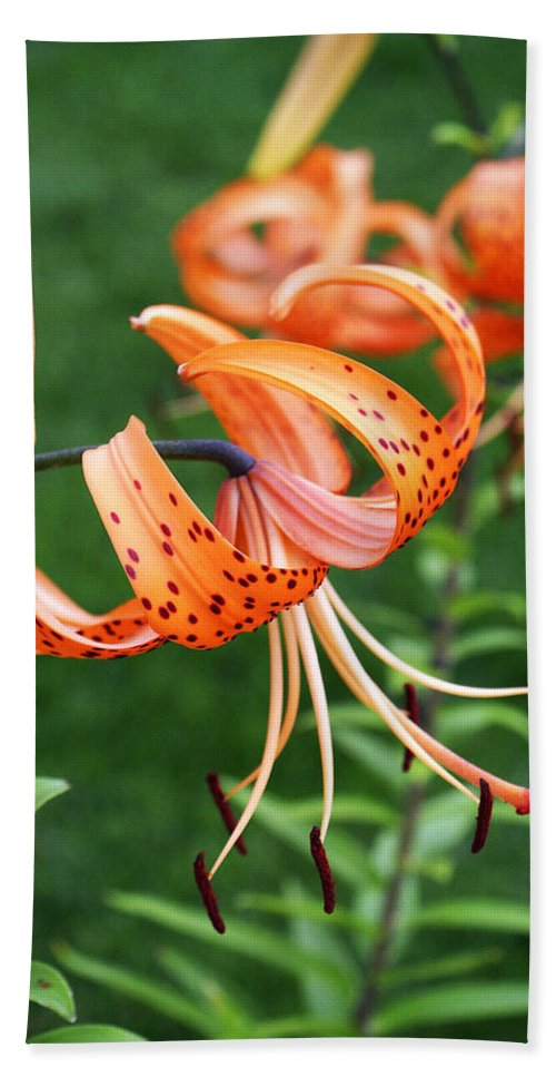 Orange Bath Sheet featuring the photograph Amazing Tiger Lily by Marilyn Hunt