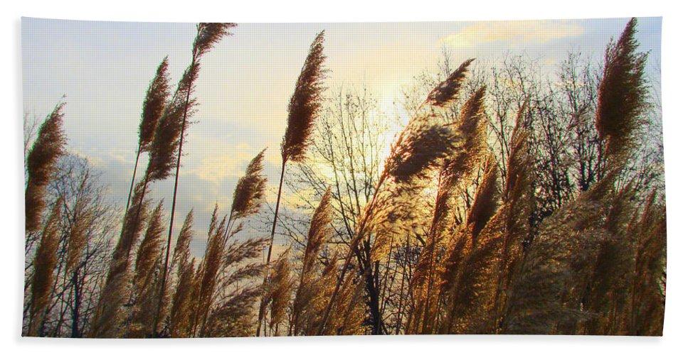 Pampasgrass Bath Sheet featuring the photograph Amber Waves Of Pampas Grass by J R Seymour