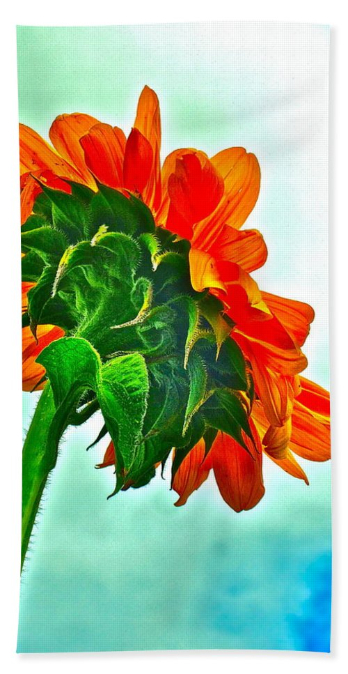 Nature Hand Towel featuring the photograph Amen by Gwyn Newcombe