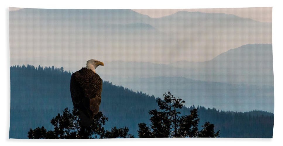 Eagle Bath Sheet featuring the photograph American Bald Eagle Sentinel by Patti Deters