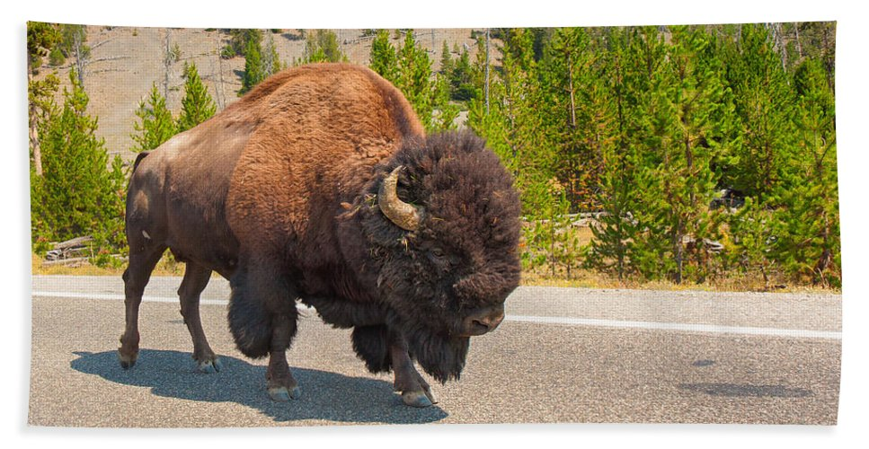 American Bison Hand Towel featuring the photograph American Bison Sharing The Road In Yellowstone by John M Bailey