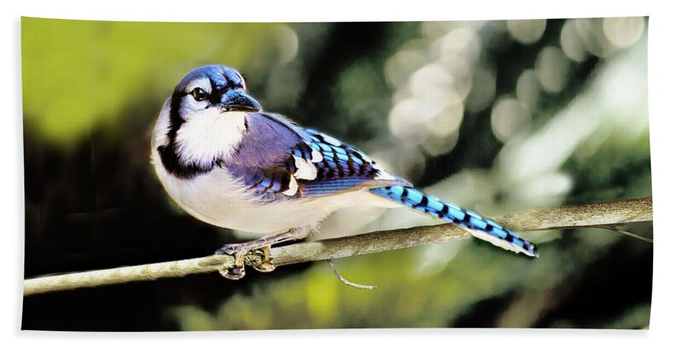 Bird Bath Towel featuring the photograph American Blue Jay On Alert by Kay Brewer