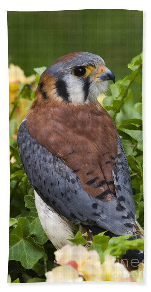 American Hand Towel featuring the photograph American Kestrel by Jill Lang