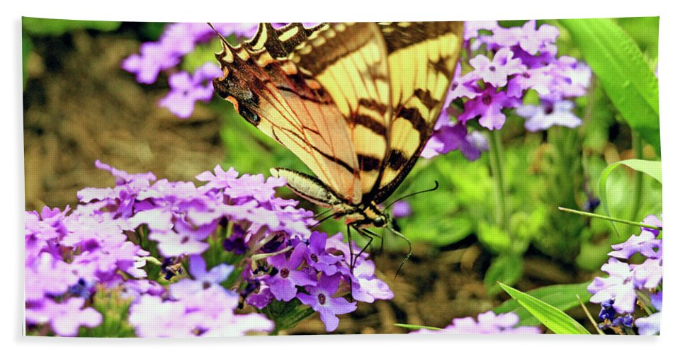 Butterfly Bath Sheet featuring the photograph Yellow Eastern Tiger Swallowtail Series by Geraldine Scull