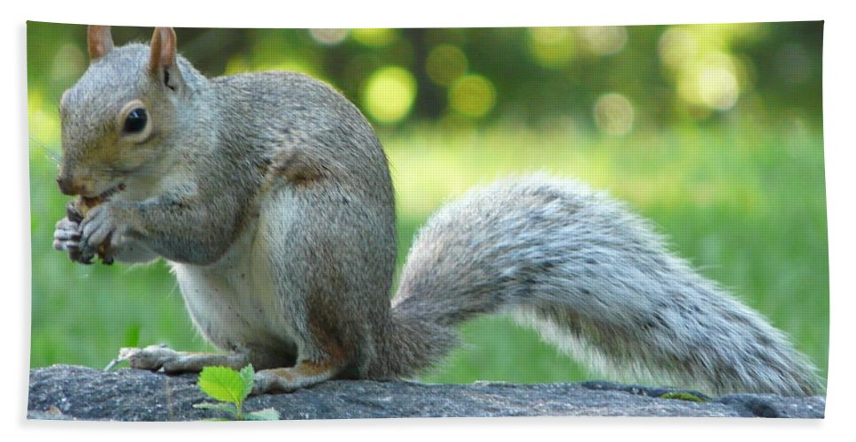 New York Hand Towel featuring the photograph American Squirrel by Valerie Ornstein
