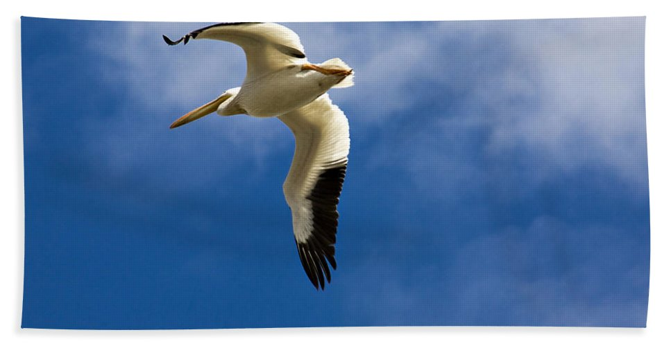 Bird Hand Towel featuring the photograph American White Pelican In Flight by Marilyn Hunt