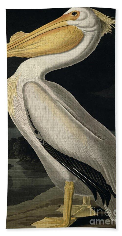 American White Pelican Bath Towel featuring the painting American White Pelican by John James Audubon