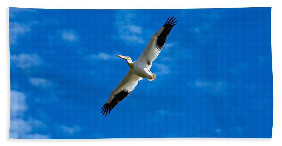 American Hand Towel featuring the photograph American White Pelican by Marilyn Hunt