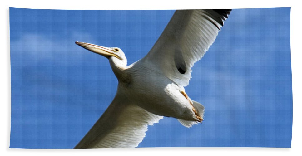Bird Hand Towel featuring the photograph American White Pelican Wings by Marilyn Hunt