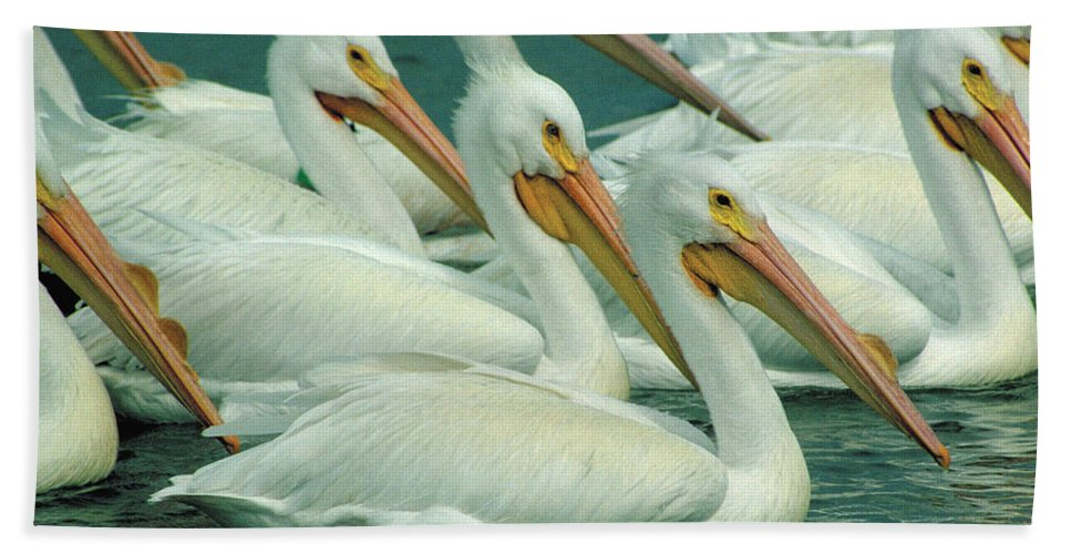 White Pelicans Bath Sheet featuring the photograph American White Pelicans by Bruce Morrison