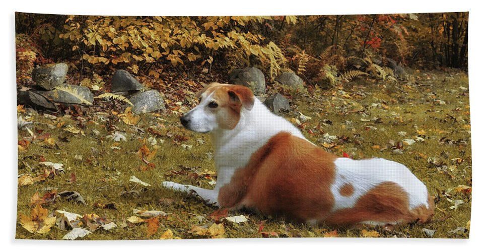 Autumn Bath Sheet featuring the photograph Among The Leaves by JAMART Photography