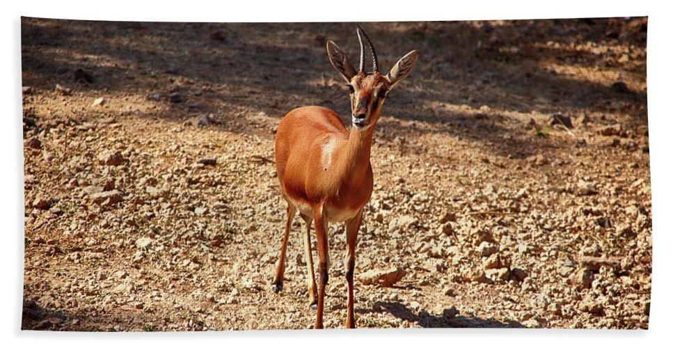 Deer Bath Sheet featuring the photograph An Innocence.. by Rajesh Kotecha