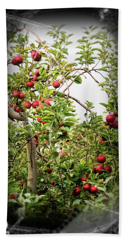 Apple Tree Bath Towel featuring the photograph An Old Apple Tree by Randy J Heath